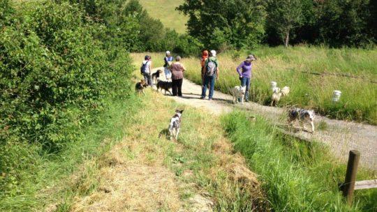 Rencontre entre chiens: comment être serein ?