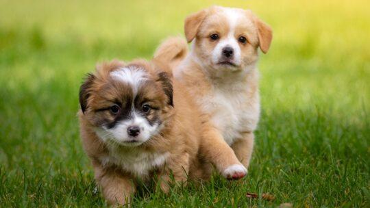 Que faut il apprendre à un chiot ou un nouveau chien ?